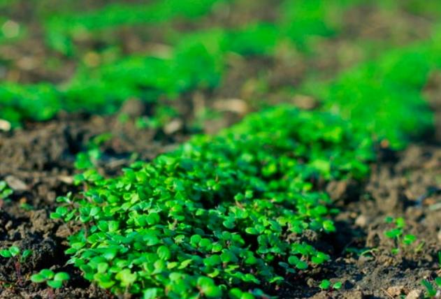 Как эффективно избавиться от сорняков